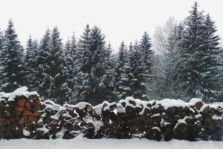 snow and trees